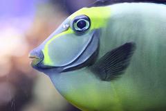birch_aquarium.jpg