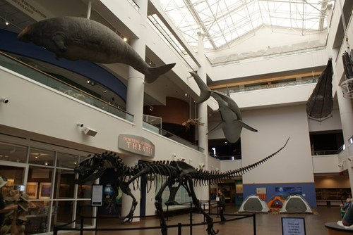 san-diego-museum-of-natural-history-01.jpg