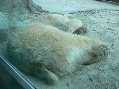san-diego-zoo-03.jpg