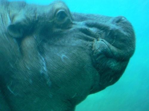 san-diego-zoo-08.jpg
