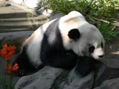 san_diego_zoo1.JPG