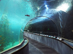 Aquarium-of-the-Bay1.jpg