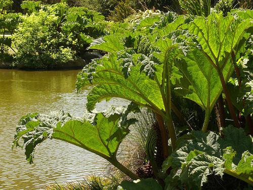 san-francisco-botanic-garden-3.jpg