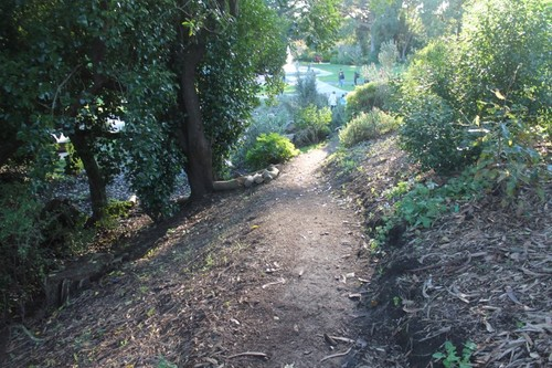 san-francisco-botanic-garden5.JPG