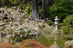 Japanese-Friendship-Garden-01.jpg