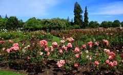 san_jose_municipal_rose_garden.jpg