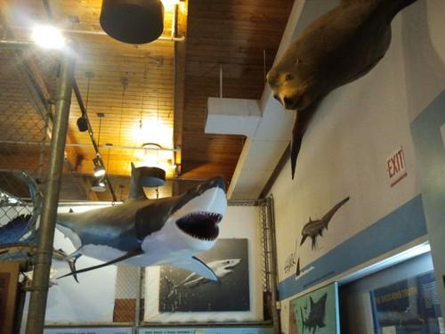 cabrillo-aquarium2.jpg