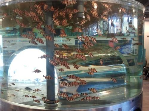 cabrillo-aquarium4.jpg