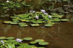 Lotusland1.jpg