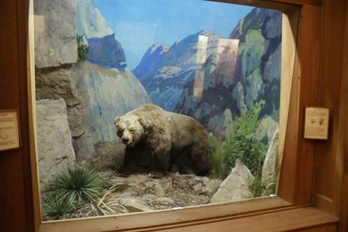museum-of-natural-history-02.jpg