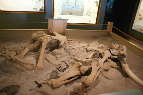 museum-of-natural-history-06.jpg