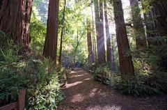 Henry-Cowell-Redwoods-State-Park1.jpg