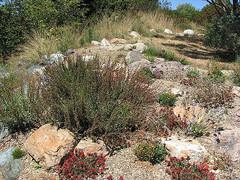 UCSC-Arboretum-1.jpg