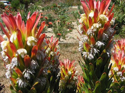 UCSC-Arboretum-3.jpg