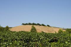 Longshadow-Ranch-Vineyard.jpg