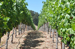 keever-vineyards.jpg