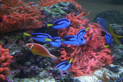 denver-aquarium.jpg