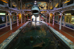 Key-West-Aquarium.jpg
