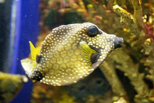 Florida-Aquarium.jpg