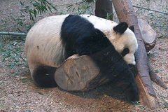 zoo_atlanta.jpg