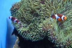 Waikiki-Aquarium.jpg