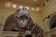 Field-Museum-of-Natural-History.jpg