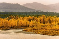 glacier-national-park-foliage.jpg