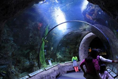 ABQ-Aquarium10.JPG