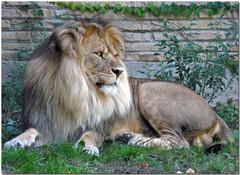 Buffalo_Zoo.jpg