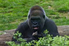 bronx-zoo-10.jpg