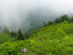 great-smocky-mountain-summer.jpg