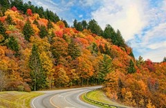 great-smoky-mountain-foliage.jpg