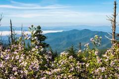 smoky-mountain-spring.jpg