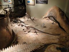 Texas_Memorial_Museum.jpg