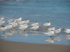 Padre-Island-National-Seashore.jpg