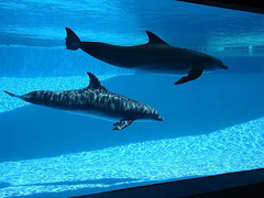 texas-state-aquarium01.jpg