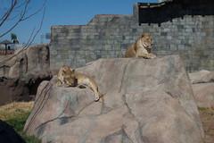 el-paso-zoo1.jpg