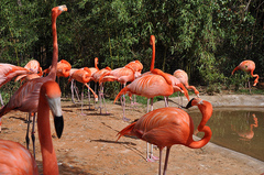 The-Fort-Worth-Zoo.jpg