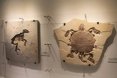 Houston-Museum-Of-Natural-Science1.JPG
