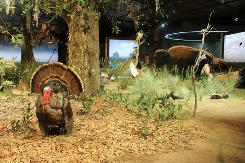 Houston-Museum-Of-Natural-Science4.JPG