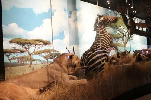 Houston-Museum-Of-Natural-Science5.JPG