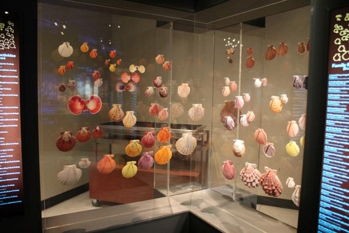 Houston-Museum-Of-Natural-Science6.JPG