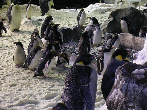 SeaWorld2.jpg