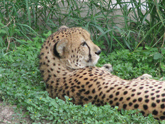 san_antonio_zoo.jpg