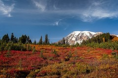 Mount-Rainier-National-Park-Foliage.jpg