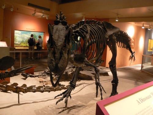 Natural-History-Museum2.JPG