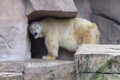 Henry-Vilas-Zoo.jpg