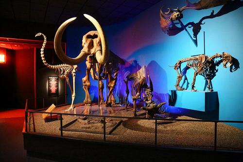 MilwaukeePublicMuseum1.jpg