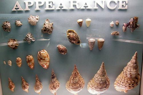 MilwaukeePublicMuseum15.jpg