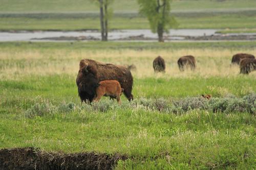 YellowstoneNationalPark14.jpg